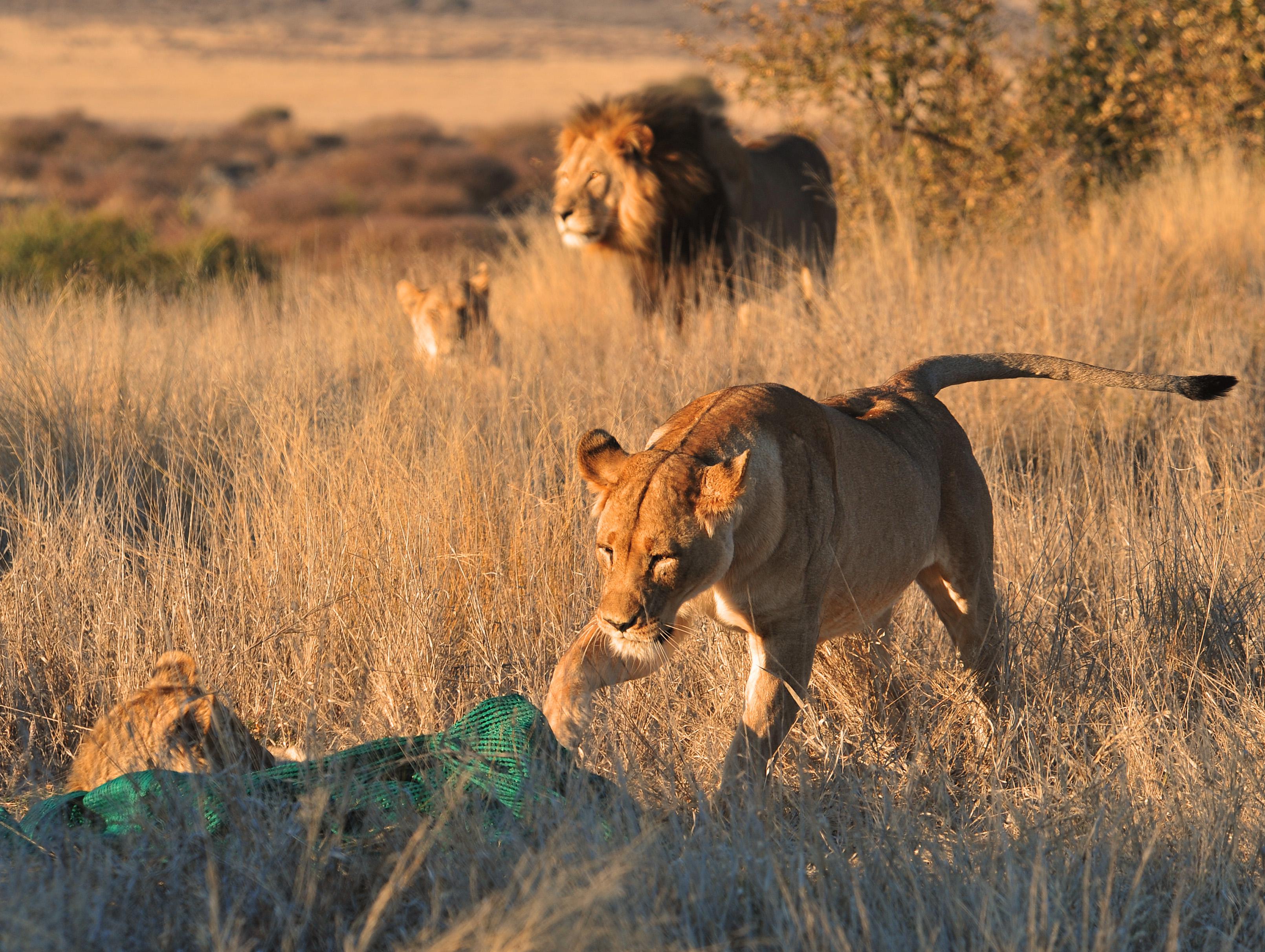Preparation Southern Kalahari Trip 7 2011